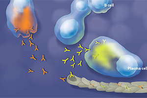 Illustrating Cellular Mechanisms